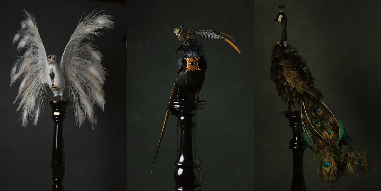 Les Oiseaux Des Bijoux
